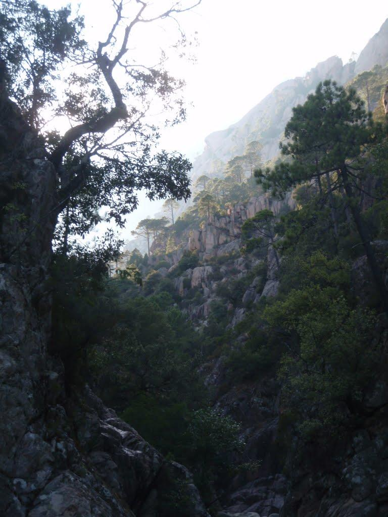 Chènes, Pins Laricios et Maritimes accrochés à la montagne corse.